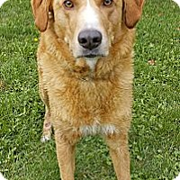 Adopt A Pet :: Chester - Douglas, ON