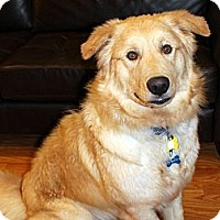 Adopt A Pet :: Jared - Denver, CO