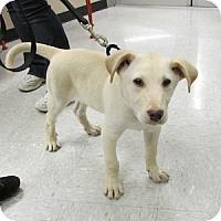 Adopt A Pet :: Parker - Gilbert, AZ