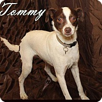 Adopt A Pet :: TOMMY - Humble, TX