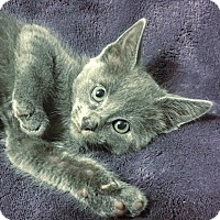 Adopt A Pet :: Smokey - Dallas, TX