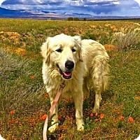 Adopt A Pet :: Pria - Santa Clarita, CA