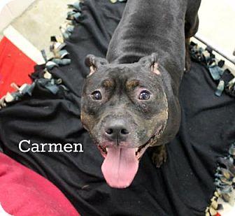 Pit Bull Terrier Mix Dog for adoption in Melbourne, Kentucky - Carmen