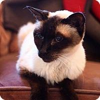 Adopt A Pet :: Mulan - THORNHILL, ON