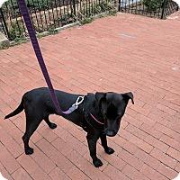 Adopt A Pet :: Auggie - Washington, DC