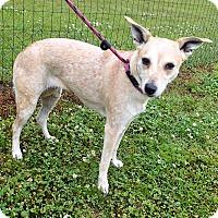 Adopt A Pet :: Toni - Newport, NC