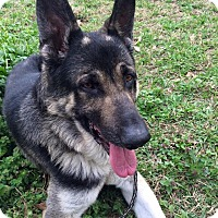 Adopt A Pet :: Owen - Nashua, NH