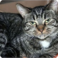 Adopt A Pet :: Yabba - Canoga Park, CA