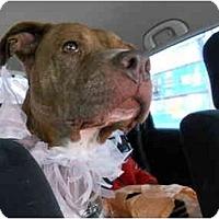 Adopt A Pet :: Gia - Dallas, PA
