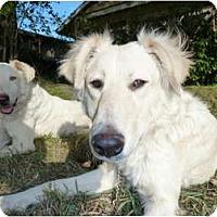 Adopt A Pet :: Toby - Mission Hills, CA