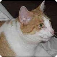 Adopt A Pet :: Missy - Jenkintown, PA