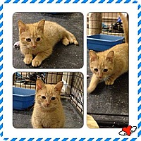 Adopt A Pet :: Morris - Washington, DC