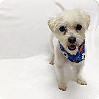 Adopt A Pet :: Jermaine - Mission Viejo, CA