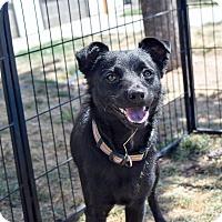 Adopt A Pet :: Ben - Meridian, ID