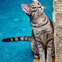 Adopt A Pet :: Krillin - Albuquerque, NM