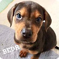 Adopt A Pet :: Hannah - Regina, SK