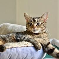 Adopt A Pet :: Zora - Greensburg, PA
