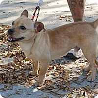 Adopt A Pet :: Buster - Minneola, FL