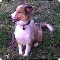 Adopt A Pet :: Einstein - Indiana, IN