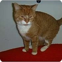 Adopt A Pet :: Warren - Hamburg, NY