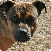 Adopt A Pet :: Izzy OKs31 - Davis, OK