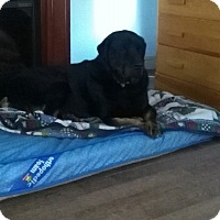 Adopt A Pet :: Maverick - Northumberland, ON