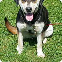 Adopt A Pet :: Maxine - Quincy, IN