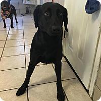 Adopt A Pet :: Davenport - Cumming, GA