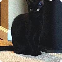 Adopt A Pet :: Onyx - Trevose, PA