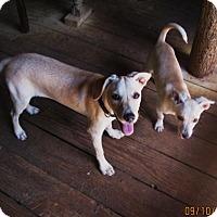 Adopt A Pet :: LILLIE - Brookside, NJ