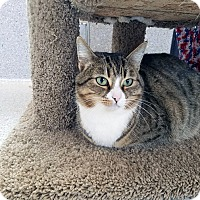 Adopt A Pet :: Mirasou - Mountain Center, CA