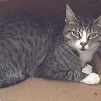 Adopt A Pet :: Dillon - Islip, NY