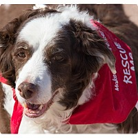Adopt A Pet :: Miss Jilly - Tempe, AZ