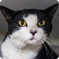Adopt A Pet :: Barack - New York, NY