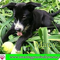Adopt A Pet :: Marcy - Pensacola, FL