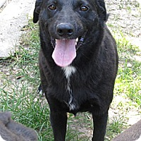Adopt A Pet :: S604 Duchess - Bay Springs, MS