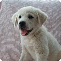 Adopt A Pet :: Valentino - Huntsville, AL