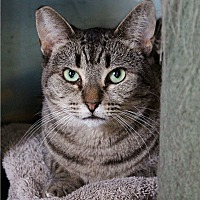 Adopt A Pet :: Chloe - Los Angeles, CA