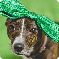 Adopt A Pet :: Xena - Murphysboro, IL