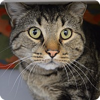 Adopt A Pet :: Cheeky - Buena Vista, CO