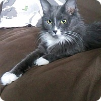 Adopt A Pet :: Poney - THORNHILL, ON