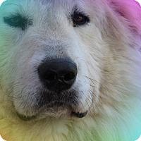 Adopt A Pet :: Winston - Kiowa, OK