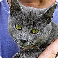 Adopt A Pet :: Bastien - Germantown, MD