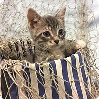 Adopt A Pet :: Gill - Savannah, GA
