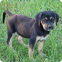 Adopt A Pet :: Jack - Monroe, GA