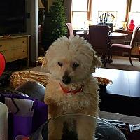 Adopt A Pet :: Poopie - Freeport, NY