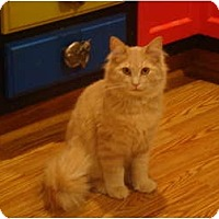Adopt A Pet :: Simba--PETSMART - Muncie, IN
