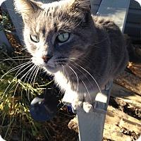 Adopt A Pet :: Erie - Leamington, ON