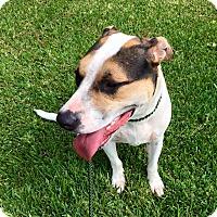 Dalmatian Mix Dog for adoption in Beaumont, Texas - ELAYNE