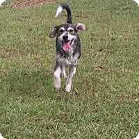 Adopt A Pet :: Percy - Vidor, TX